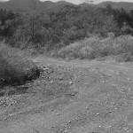 Potential Trail Site B&W
